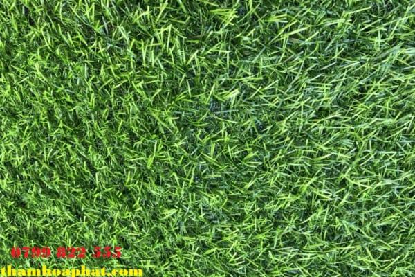 cỏ nhân tạo 2 cm