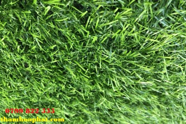 cỏ nhân tạo 2,5 cm
